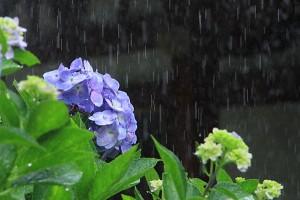 梅雨の俳句_002